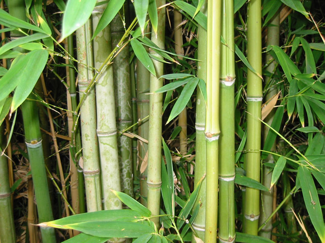 Why Use Bamboo